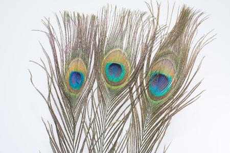 plumas de pavo real: Las plumas de pavo real blanco