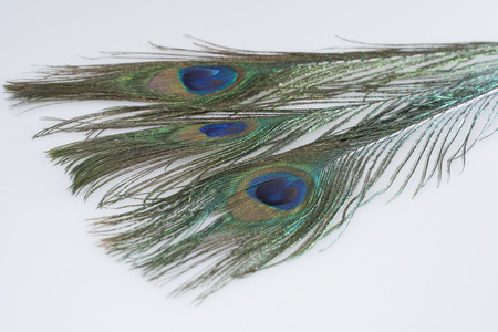 peacock feathers: Peacock Feathers Isolated Stock Photo