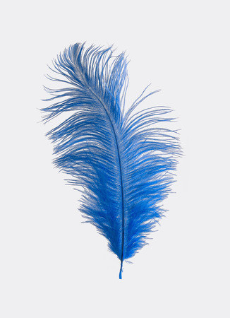 royal blue: Royal Blue Ostrich Feather Isolated
