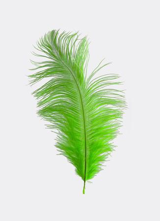ostrich: Verde lima pluma de la avestruz aislada Foto de archivo
