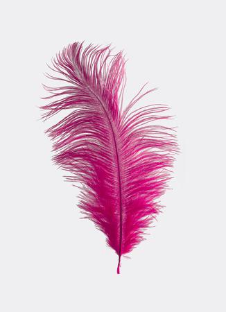 ostrich: Pluma de avestruz de color rosa aisladas