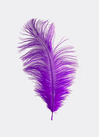 ostrich: Pluma de avestruz púrpura aislado