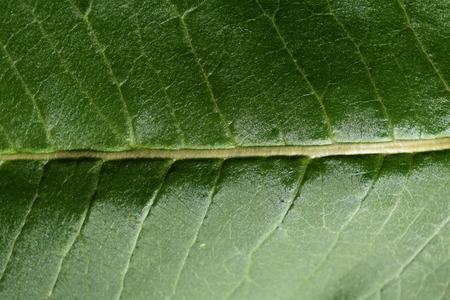 光沢のある緑の葉の詳細