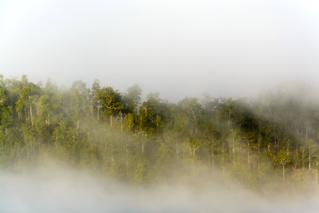 misty forest: Misty  forest on the mountain