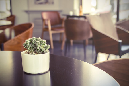 Small cactus in a room, Vintage style