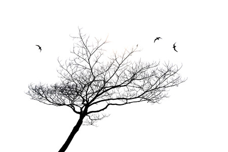 lonely bird: silhouette of lonely tree and bird isolated on white background Stock Photo