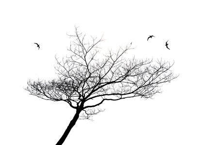 arboles blanco y negro: silueta de árbol solitario y aves aisladas sobre fondo blanco Foto de archivo