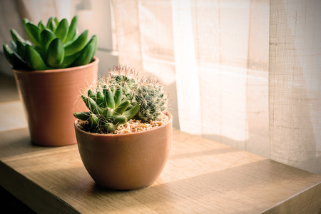 various of small plant and cactus in a pot, Vintage style Stock Photo