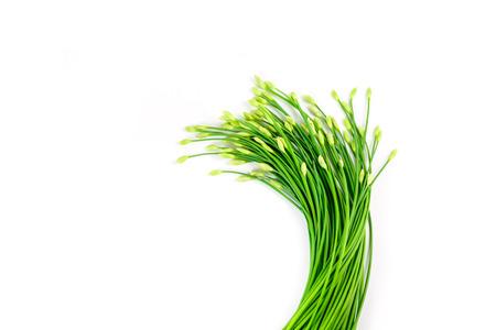 tuberosum: Garlic chives or Allium tuberosum isolated on white background Stock Photo