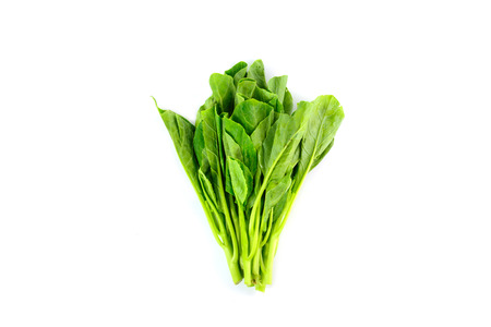 fresh chinese kale vegetables isolated on white background