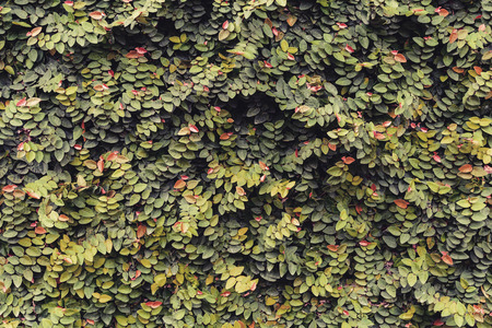 assort: Green leaves background and textured, Vintage tone
