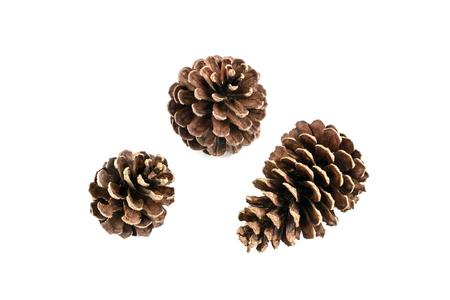 pino: conjunto de varios árboles de pino de cono aislado en fondo blanco