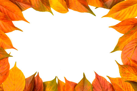 coy: Colorful frame of fallen autumn leaves on the white background with coy space
