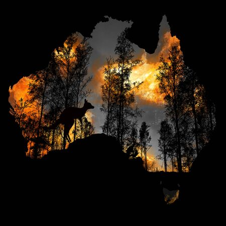Australia fires: The animals struggling in the crisis. 480 million animals are being directly affected by Australia's bushfire crisis,. The extreme fires have ripped through natural habitatsAustralia fires: The animals struggling in the crisis. 480 million animals are being directly affected by Australia's bushfire crisis,. The extreme fires have ripped through natural habitats