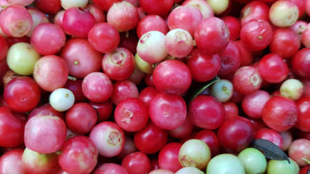 Ripe juicy cranberries from the forest