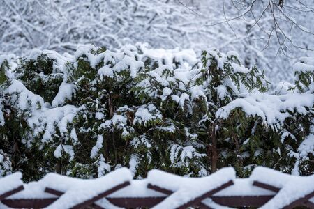 Snowy winter trees in a park behind a fence on which snow lies