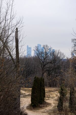Skyscrapers in the distance visible from the forest