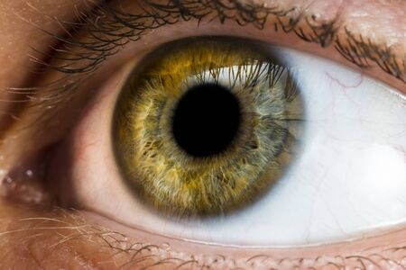 male eye of yellow, green and some blue colors close-up Banque d'images