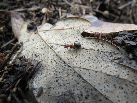 non urban 1: Ants in an anthill working in an oak forest.
