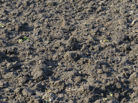 black soil: A small area of black soil, previously plowed.