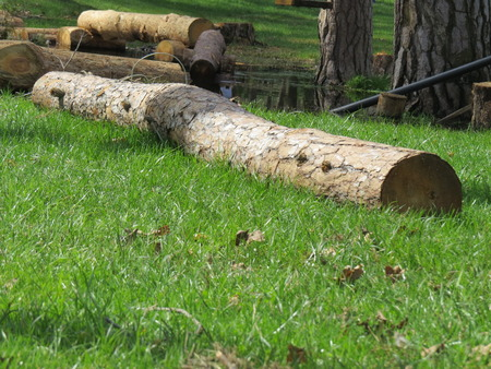 forest conservation: Several wooden beams lying on green grass. Stock Photo