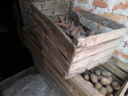 unwashed: Set of unwashed vegetables in an old wooden box.