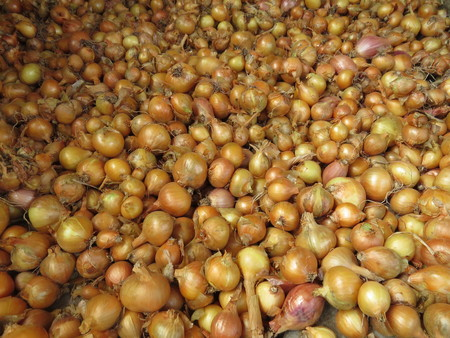 bulb and stem vegetables: Harvest onions without purification from the husks and green fodder Stock Photo