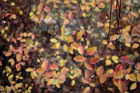 yellowing: Yellowing leaves of the trees in autumn. Stock Photo
