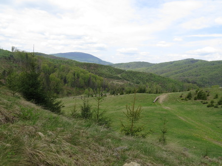 Polonyny Carpathian Mountains and forests in the background in summer.