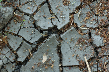 waterless: abstract background - gray cracked waterless soil and plants