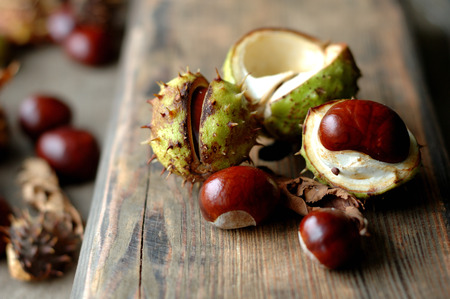 horse chestnut seed: Several ripe chestnuts on a wooden background.