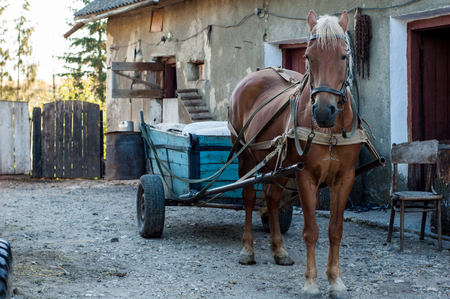 The brown horse is harnessed to the cart.