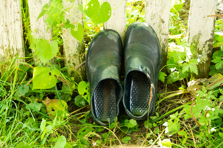 Rubber boots are dried in the grass in the garden. Stock Photo