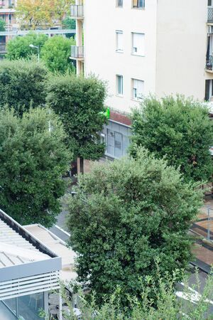 Summer European street with trees growing on it - top view.