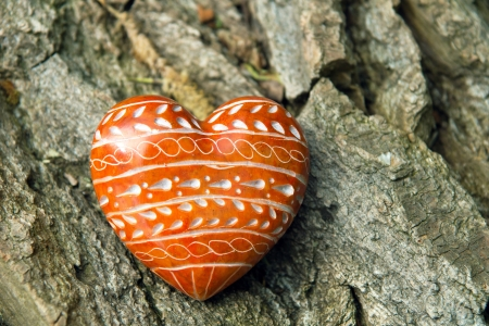 cordiality: red Heard on tree bark