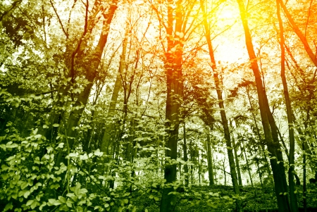 spring forest - North German forest in spring, sunlight flooded   Stock Photo