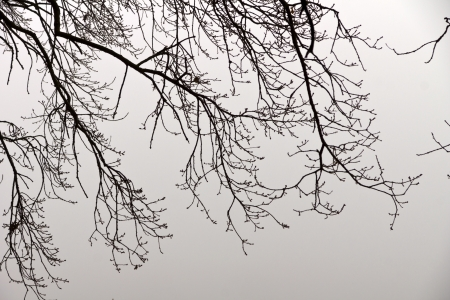 foggy day - The branches of a forest in front of the foggy background on the Elbe  photo