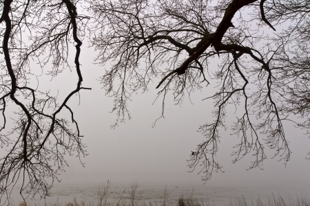 foggy day - The branches of a forest in front of the foggy background on the Elbe