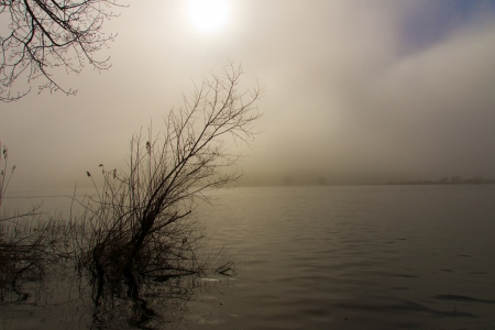 Morning fog - The sun rises above the morning mist on the Elbe river