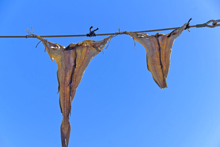 Dried Fish - Fish are dried in the air  Seen in Denmark