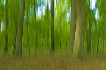 Summer Forest - Inclusion in the wood with a special technique