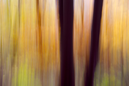 Autumn Forest - A shooting in the forest with a special technique
