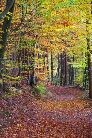 road autumnal: Autumn - The forest with autumn leaves Stock Photo