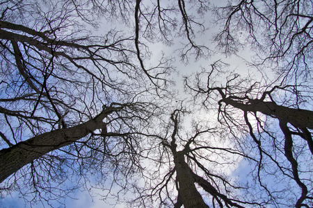 Skyward - Bare trees in winter from the worm