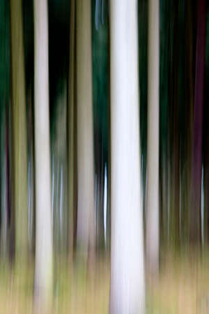 Forest - The forest in blurred technique.