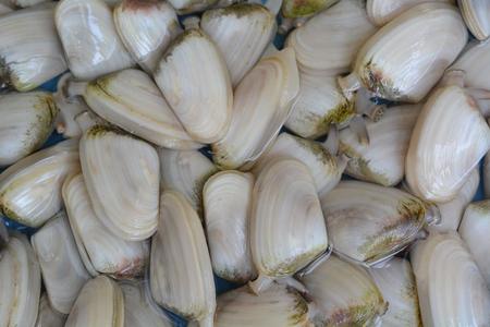 manjar: almeja tuatua prima, delicadeza crustáceos Foto de archivo