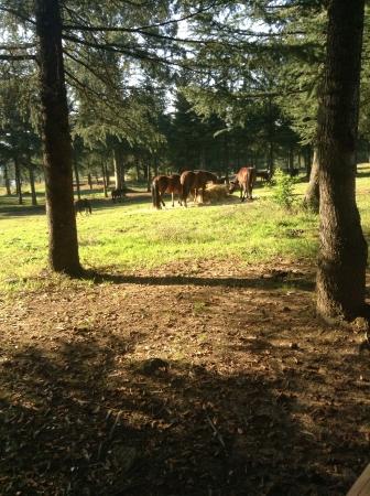 otganimalpets01: Grazing in the paddock