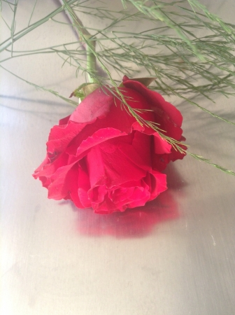 reflective: Reflective red rose with stem