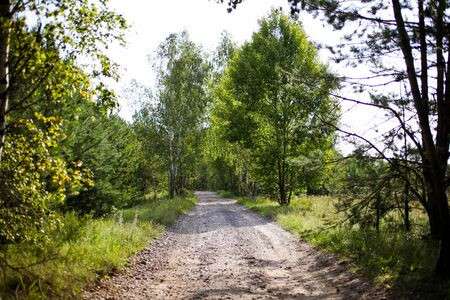 Path leading to beautiful forest with pines and birches. Concept wildlife.