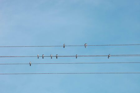 Flock of birds sits on wires against blue cloudy sky.